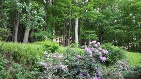 Bosque con las flores fotografía de archivo