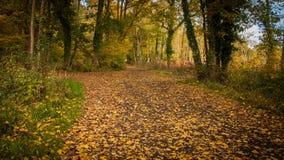 Bosque con las hojas anaranjadas Fotos de archivo