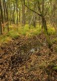 Bosque con las hojas anaranjadas Fotografía de archivo libre de regalías