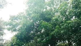 Bosque con las hojas del viento y del flujo metrajes