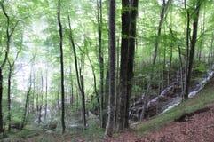 Bosque con lluvia de llovizna fina imagen de archivo