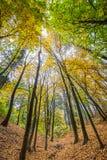 Bosque con los árboles altos en otoño Fotos de archivo