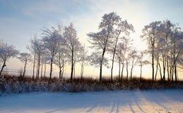 Bosque con los árboles de hojas caducas en paisaje del invierno Imagen de archivo