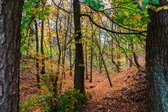 Bosque con los árboles en otoño Foto de archivo libre de regalías