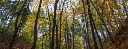 Bosque con los árboles en otoño Imágenes de archivo libres de regalías