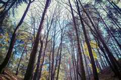 Bosque con los árboles en otoño Imagen de archivo