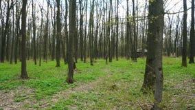 Bosque con los árboles sin follaje almacen de video