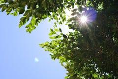 Bosque con luz del sol Imagen de archivo libre de regalías