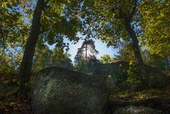 Bosque con luz del sol Los rayos del sol a través de ramas de árboles Imagen de archivo libre de regalías