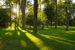 Bosque con luz del sol y sombras en la puesta del sol Foto de archivo