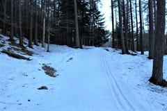 bosque con nieve Foto de archivo