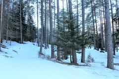 bosque con nieve foto de archivo libre de regalías