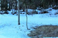 bosque con nieve imagen de archivo