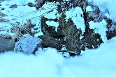 bosque con nieve imagenes de archivo