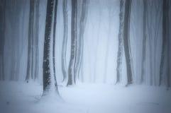 Bosque con nieve, helada y niebla en invierno imagen de archivo