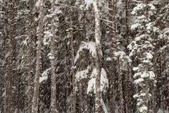 Bosque con nieve que cae Fotos de archivo