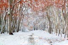 Bosque con nieve y hojas otoñales rojas Fotos de archivo libres de regalías