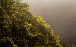 Bosque con salida del sol Fotos de archivo