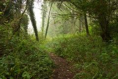 Bosque con una niebla fantasmal Fotos de archivo