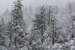 Bosque congelado imagen de archivo libre de regalías