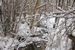 Bosque congelado Fotografía de archivo libre de regalías