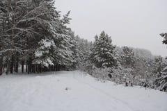Bosque congelado imagen de archivo