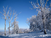 Bosque congelado Fotos de archivo libres de regalías