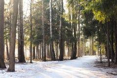 Bosque congelado fotografía de archivo