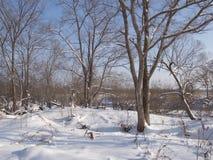 Bosque congelado Imágenes de archivo libres de regalías