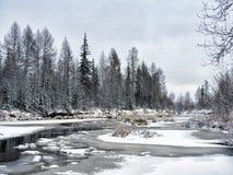 Bosque congelado Foto de archivo
