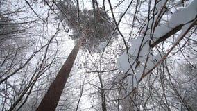 Bosque congelado almacen de metraje de vídeo