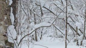 Bosque congelado metrajes