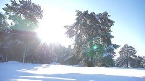 Bosque congelado del invierno con los árboles nevados vídeo de movimiento lento de la forma de vida bosque del pino del invierno  metrajes