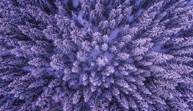 Bosque congelado desde arriba Imagen de archivo
