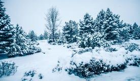 Bosque congelado frío blanco del invierno en el estado de Washington Foto de archivo
