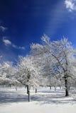 Bosque congelado invierno en nieve Imagen de archivo libre de regalías