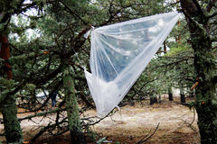 Bosque contaminado Fotos de archivo