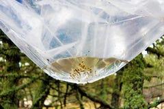 Bosque contaminado Imagen de archivo