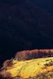 Bosque contra un acantilado Fotos de archivo