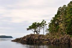 Bosque costero Imágenes de archivo libres de regalías