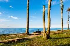 Bosque costero en la costa de mar Báltico en Nienhagen, Alemania fotografía de archivo