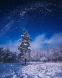 Bosque cubierto con nieve fresca en una luz de luna Fotografía de archivo libre de regalías