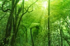 Bosque cubierto de musgo imagenes de archivo