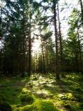 Bosque cubierto de musgo Foto de archivo libre de regalías