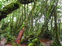Bosque cubierto de musgo imagen de archivo
