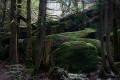 Bosque cubierto de musgo Fotos de archivo libres de regalías