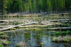 Bosque cubierto de musgo verde de Fall River Fotografía de archivo libre de regalías