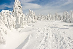 Bosque cubierto por la nieve Fotos de archivo libres de regalías