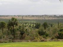 Bosque da árvore de citrino imagem de stock royalty free