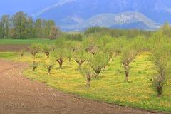 Bosque da avelã na primavera imagens de stock